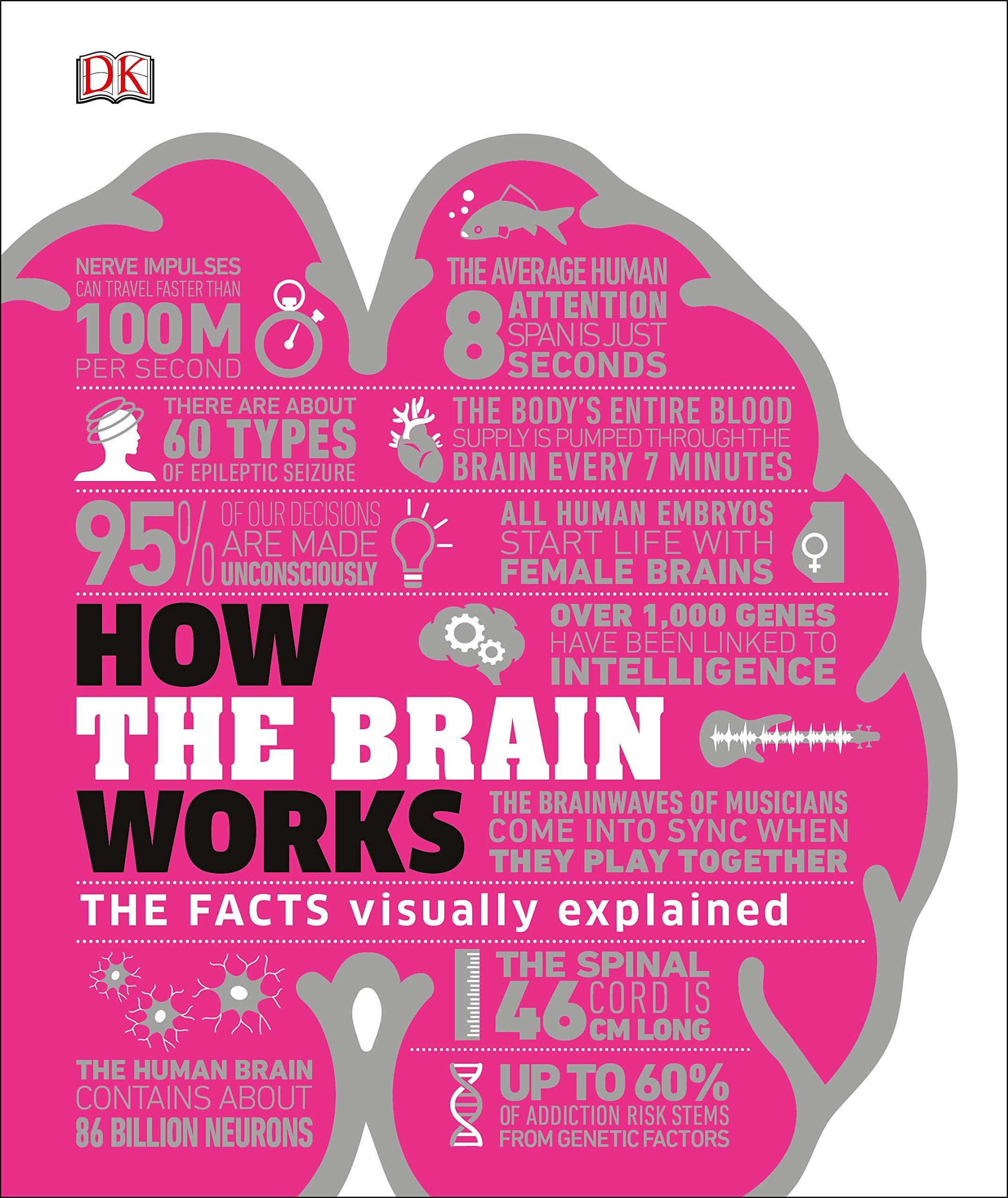 How the Brain Works : The Facts Visually Explained